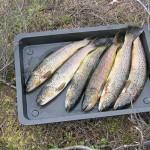 - Gode fiskemuligheter i Sæsvatn.